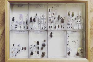 1-boite-entomologique-de-vulgarisation-avec-des-sous-boites-pour-categoriser-
